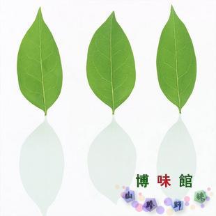 牛樟树叶 图片合集图片