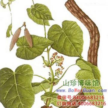 背景 壁纸 绿色 绿叶 盆景 盆栽 树叶 植物 桌面 360_360